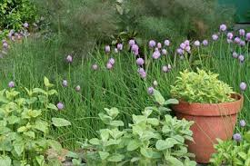 herbal garden herb garden lovetoknow