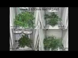250 watt hid grow lights 90w led ufo comparison 400w hps youtube
