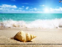 seashells wallpaper 52