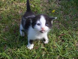 top 20 most cutest cat pictures cutest cats