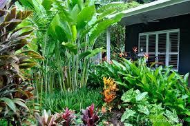 captivating sub tropical garden ideas google search tropical