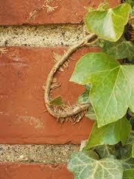 climbing plants hgtv