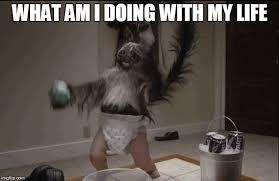 Baby Monkey Meme - puppy monkey baby memes imgflip