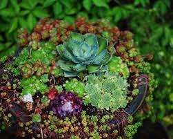 succulent garden ideas u0026 photos