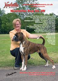 boxer dog crufts 2015 boxer stud dogs show team