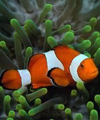 home aquarium fish types 1000 aquarium ideas 1000 aquarium ideas