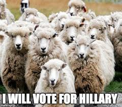 Alpaca Sheep Meme - hillary supporters imgflip