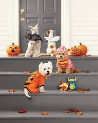 Martha Stewart Dog Halloween Costumes 78 Costume Dress Images