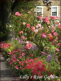rose bed planning and designing your rose garden