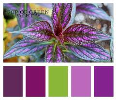 Best Purple  Green Together Images On Pinterest Colors - Bedroom colors 2012