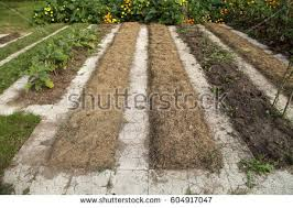 garden mulch stock images royalty free images u0026 vectors