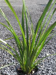 native plants nz native plants