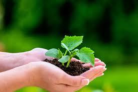 garten und landschaftsbau ausbildung garten und landschaftsbau gehalt studium ausbildung und