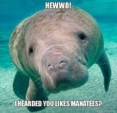 Manatee Meme - hewwo i hearded you likes manatees make a meme