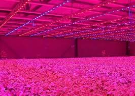 led marijuana grow lights led lighting top 10 ideas led grow light led grow light review