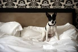 Dog Peed On Bed Fixing Excitement In Dogs