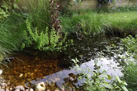 wildlife pond without liner gardening forum gardenersworld com