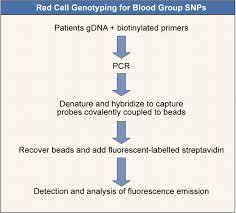 red cell genotyping and the future of pretransfusion testing