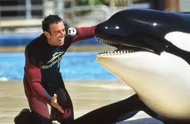 former trainer slams seaworld for cruel treatment of orcas