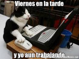 imagenes viernes trabajando viernes en la tarde y yo aun trabajando meme de gato navegando en