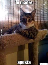 imagenes groseras de gatos memes en español grosero gato y frases de risa