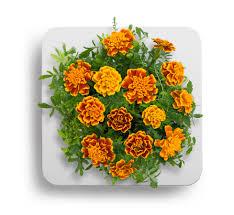click and grow odla blommor inomhus enkelt