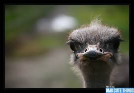 Ostrich Meme - disapproving ostrich blank template imgflip