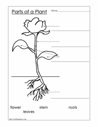 collection of solutions first grade science worksheets on plants
