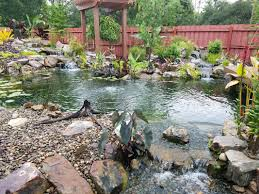 ecosystem koi fish ponds water gardens central fl