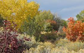 buy native plants online plants of the southwest u2013 plants of the southwest