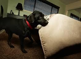Do Bed Bugs Get On Dogs Do Dogs Carry Bed Bugs Dog Beds Gallery Images And Wallpapers Dog