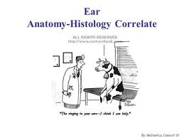 Attic Ear Anatomy Anatomy And Physiology Of The External Ear Middle Ear And Inner
