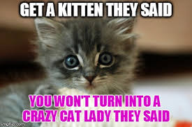 Funny Kitten Memes - adorable kitty memes kitty best of the funny meme