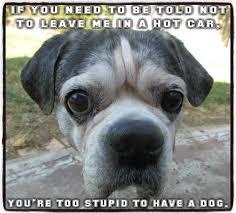 Dog In Car Meme - saving pets smashing car windows is legal pressroomvip part 2