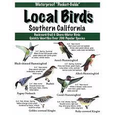 California birds images Southern california local birds jpg