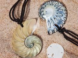 where to buy seashells buy seashells online seashells for home decoration the
