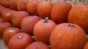 new orleans u2013 themed halloween treats