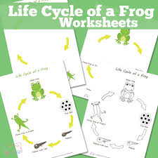 life cycle of a frog worksheet itsy bitsy fun