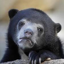 Confession Bear Meme Generator - bear grylls lord rings meme