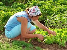 how to grow a vegetable garden lovetoknow