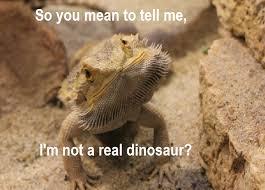 Lizard Meme - 30 bearded dragon memes to make you smile animalpages