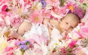 baby flowers new baby flowers from lebanon garden of floral shop your