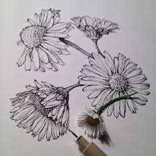 flower drawing we heart it cute beautiful and pretty image on we