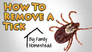 how to remove a tick best way youtube