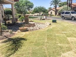 plants u0026 trees phoenix pool builder u0026 landscape design specialists