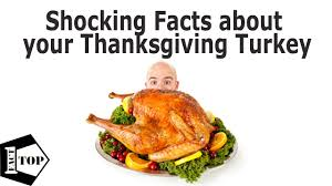 10 shocking sad facts about your thanksgiving turkey