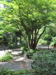 Leach Botanical Garden View Near The Entrance Picture Of Leach Botanical Garden