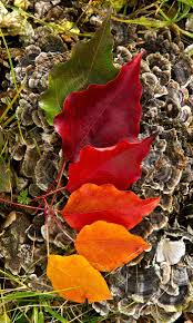 306 best autumn images on pinterest ana rosa thanksgiving and
