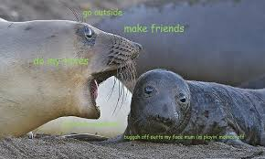 Elephant Meme - elephant seal memes home facebook