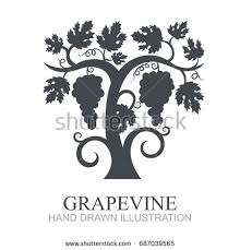 hand drawn vector illustration vineyard grapes stock vector